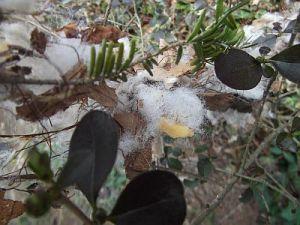nesting debris1