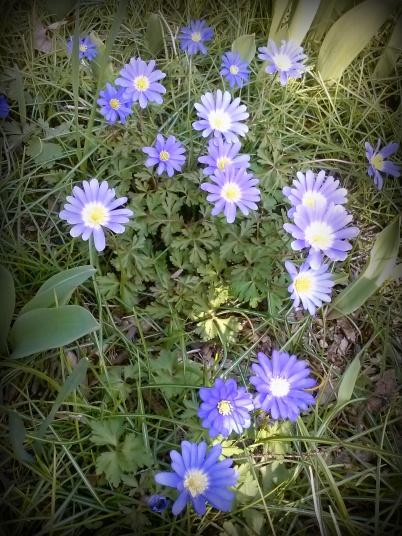 windflowers3.jpg